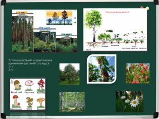7.Польза растений и практическое применение растений 1-го яруса 2-го 3-го