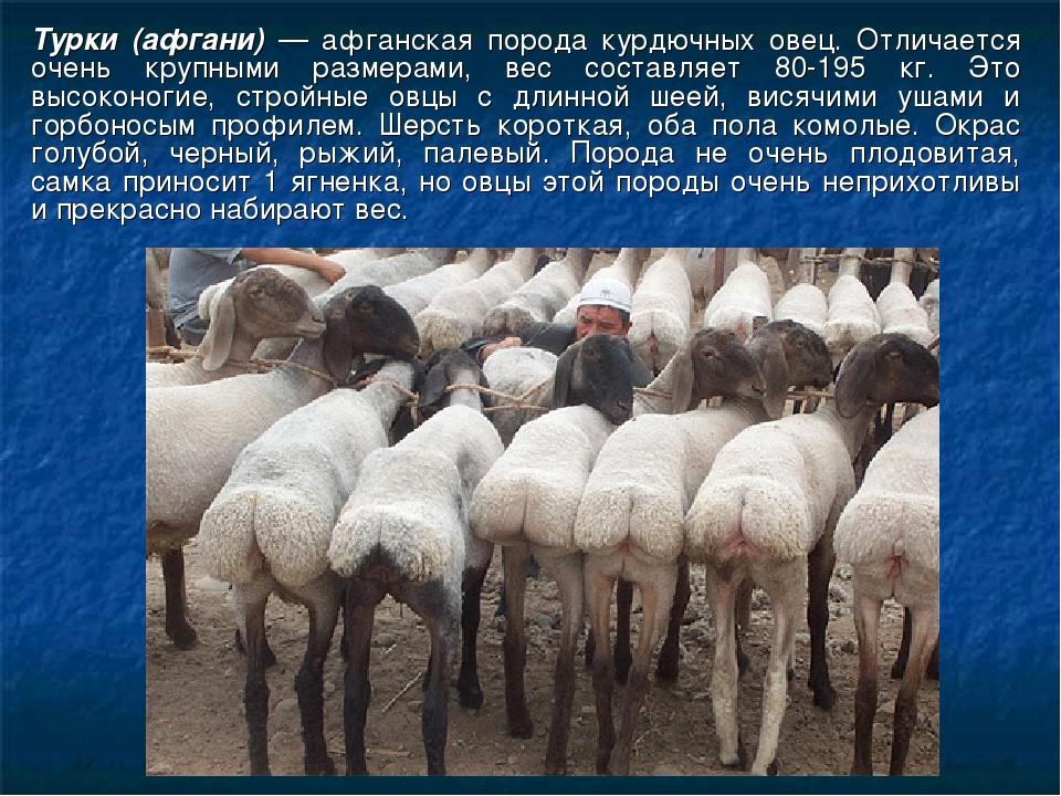 Картинка приколы узбекские