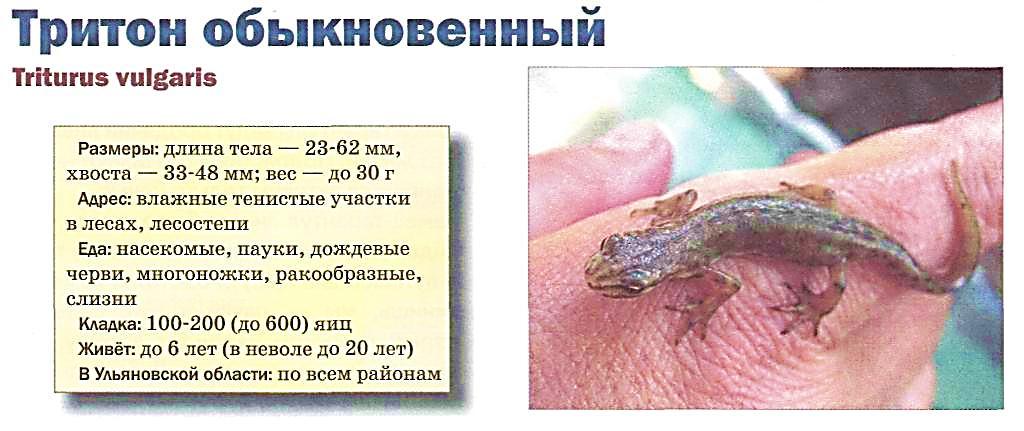 hello_html_19ff671b.jpg