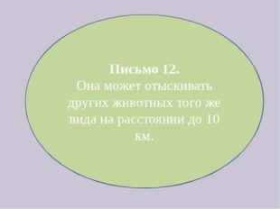 Письмо 12. Она может отыскивать других животных того же вида на расстоянии до