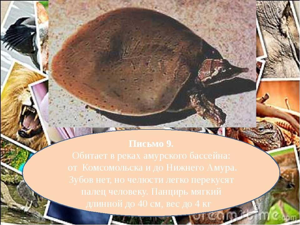 Письмо 9. Обитает в реках амурского бассейна: от Комсомольска и до Нижнего Ам...
