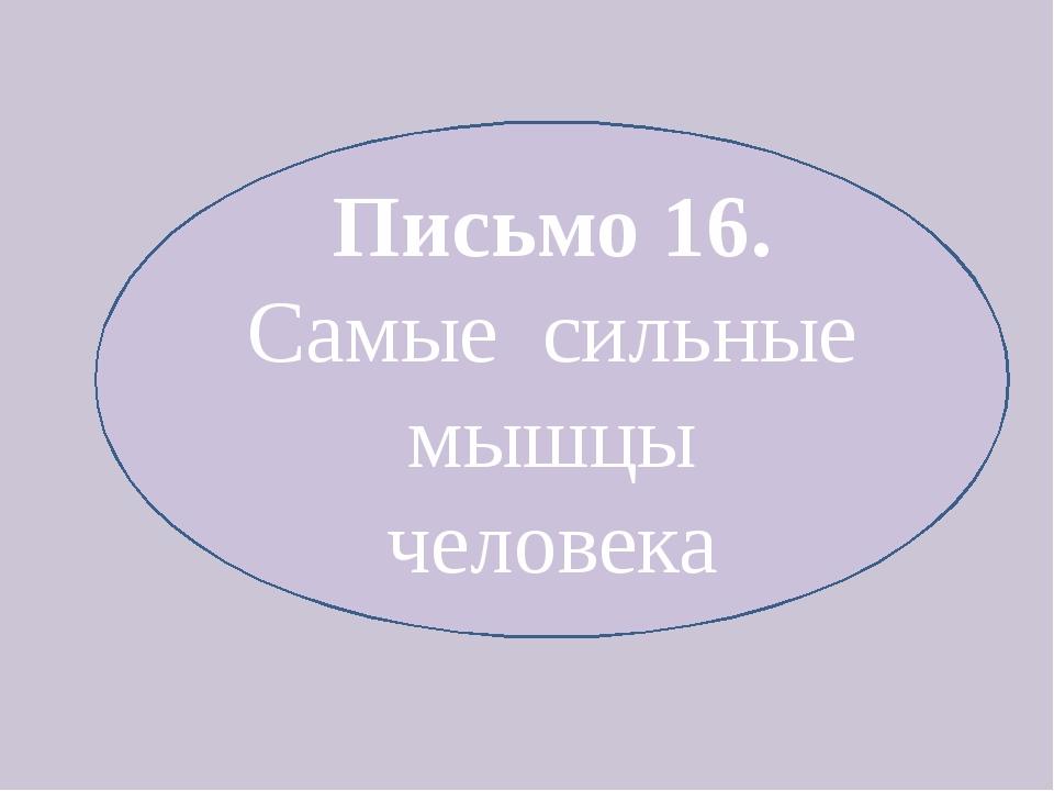 Письмо 16. Самые сильные мышцы человека