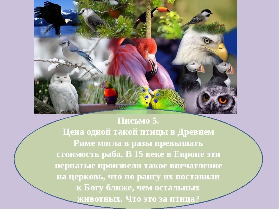 Письмо 5. Цена одной такой птицы в Древнем Риме могла в разы превышать стоимо...