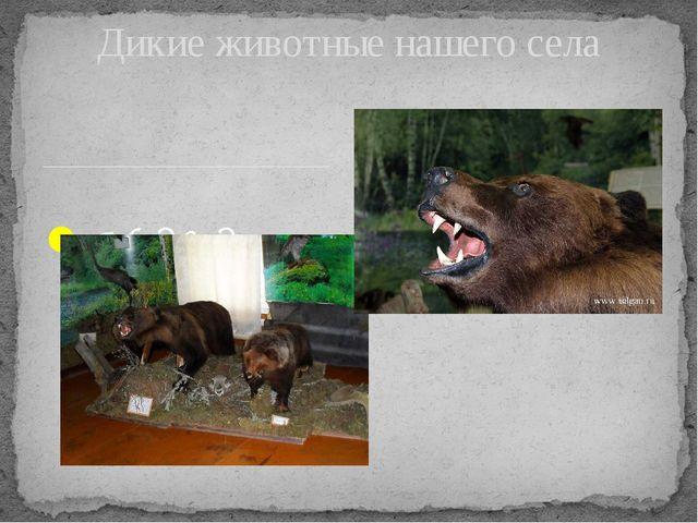 Медведи Дикие животные нашего села