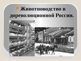 Животноводство в дореволюционной России.
