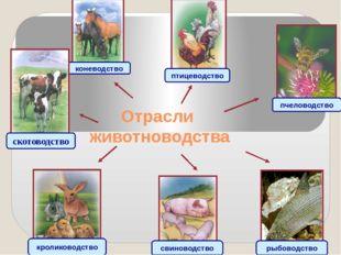 Отрасли животноводства коневодство птицеводство пчеловодство рыбоводство свин