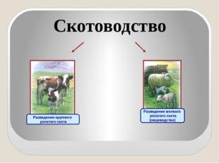 Скотоводство Разведение крупного рогатого скота Разведение мелкого рогатого