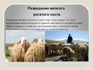 Разведение мелкого рогатого скота. Разведение мелкого рогатого скота тоже оч
