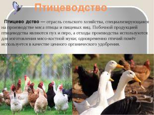 Птицеводство Птицево́дство— отрасльсельского хозяйства, специализирующаяся