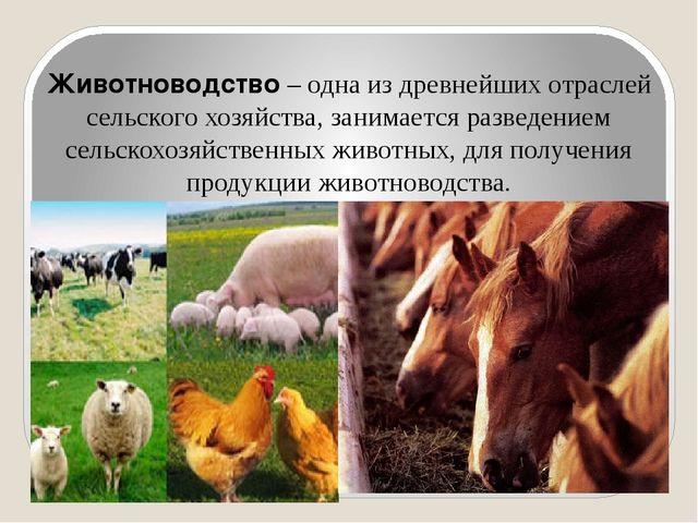 Животноводство – одна из древнейших отраслей сельского хозяйства, занимается...