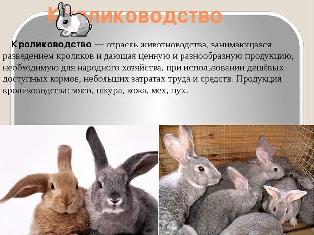 Кролиководство Кролиководство— отрасльживотноводства, занимающаяся разведе...