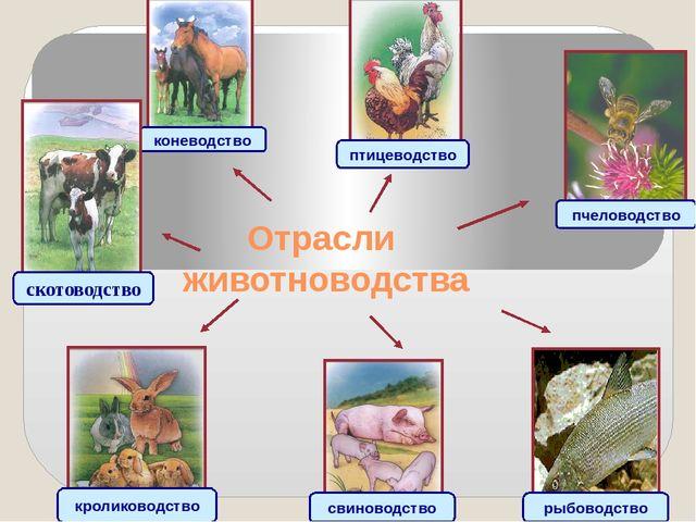 Отрасли животноводства коневодство птицеводство пчеловодство рыбоводство свин...