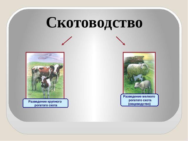 Скотоводство Разведение крупного рогатого скота Разведение мелкого рогатого...