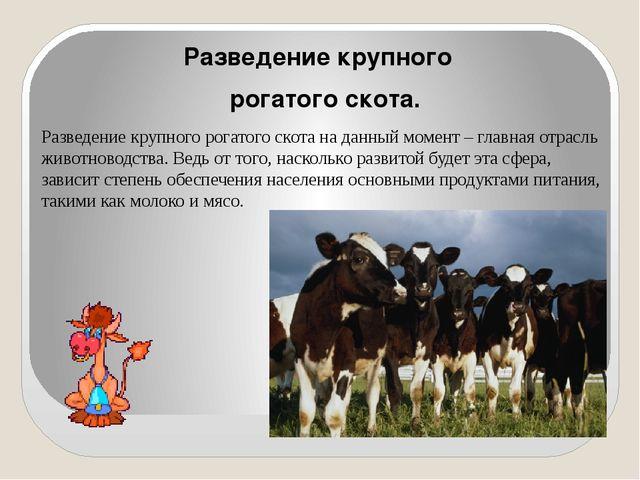 Разведение крупного рогатого скота. Разведение крупного рогатого скота на да...