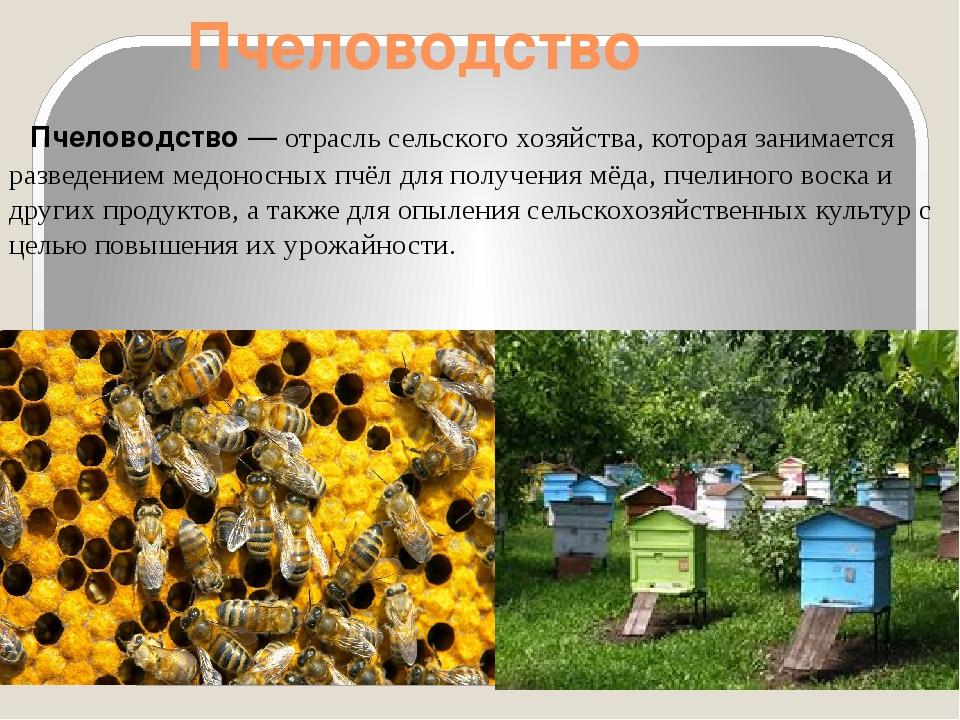 Пчеловодство Пчеловодство— отрасльсельского хозяйства, которая занимается...