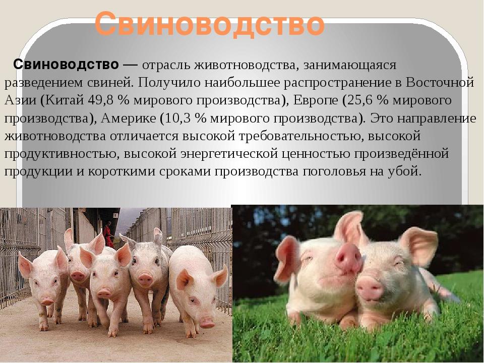 Свиноводство Свиноводство— отрасльживотноводства, занимающаяся разведением...