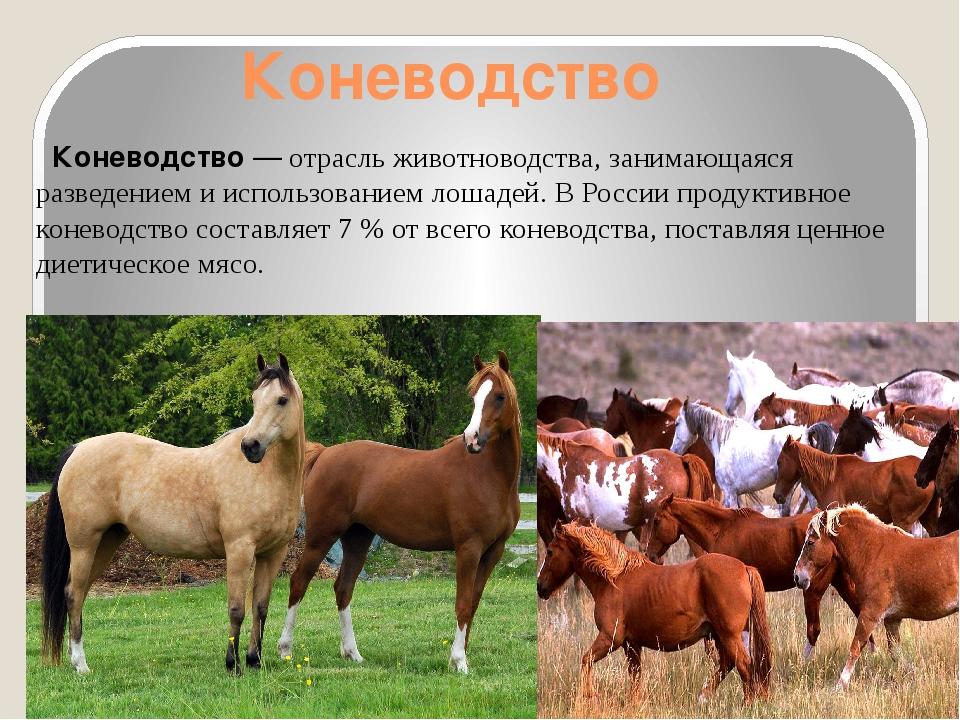 коллекции представлены животноводство знасение отрасли в народном хозяйстве вообщем подвергнуть