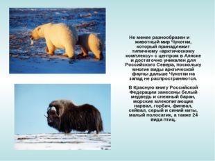 Не менее разнообразен и животный мир Чукотки, который принадлежит типичному