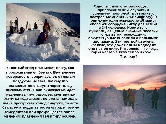Одно из самых потрясающих приспособлений к суровым условиям полярной пустыни...