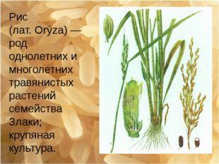Рис (лат.Orýza)— род однолетних и многолетних травянистых растений семейств