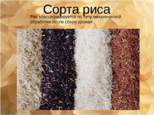 Сорта риса Рис классифицируется потипу механической обработки после сбора ур