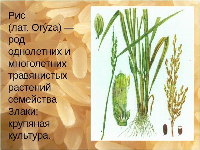Рис (лат.Orýza)— род однолетних и многолетних травянистых растений семейств...