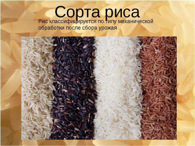 Сорта риса Рис классифицируется потипу механической обработки после сбора ур...
