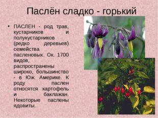 Паслён сладко - горький ПАСЛЕН - род трав, кустарников и полукустарников (ред