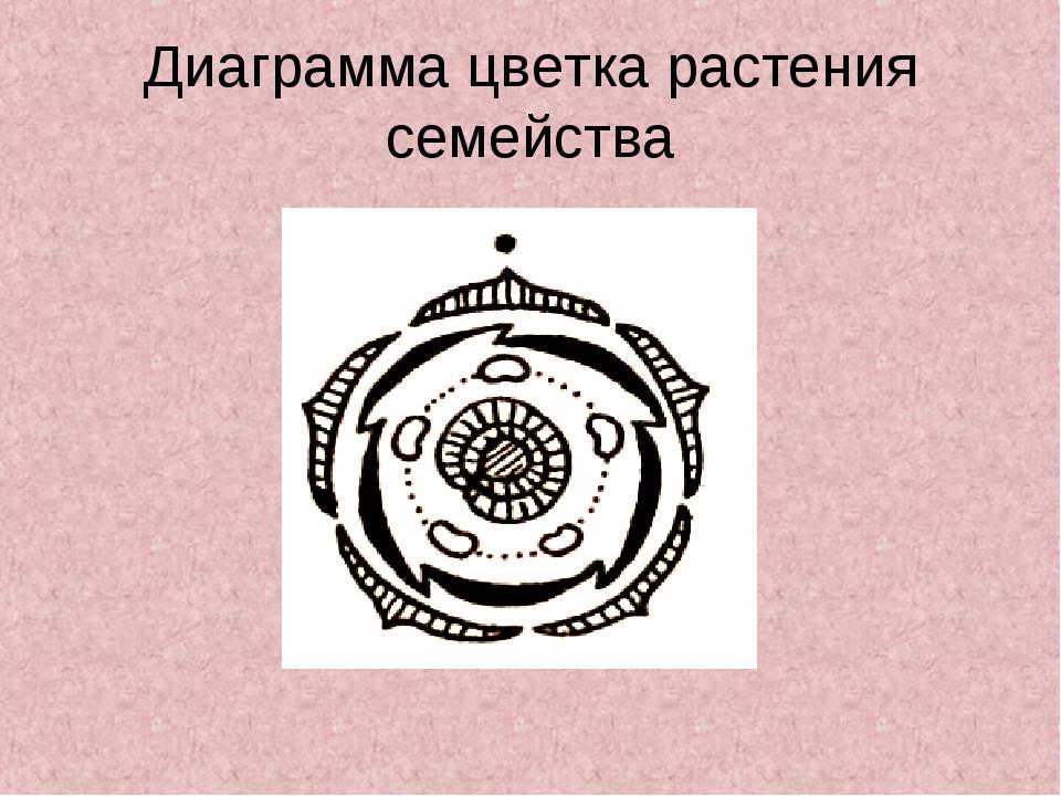 Диаграмма цветка растения семейства