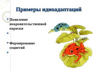 Примеры идиоадаптаций Появление покровительственной окраски Уплощение тела пр