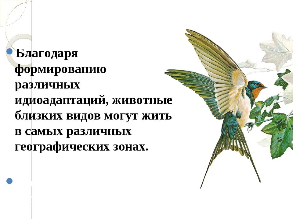 Благодаря формированию различных идиоадаптаций, животные близких видов могут...