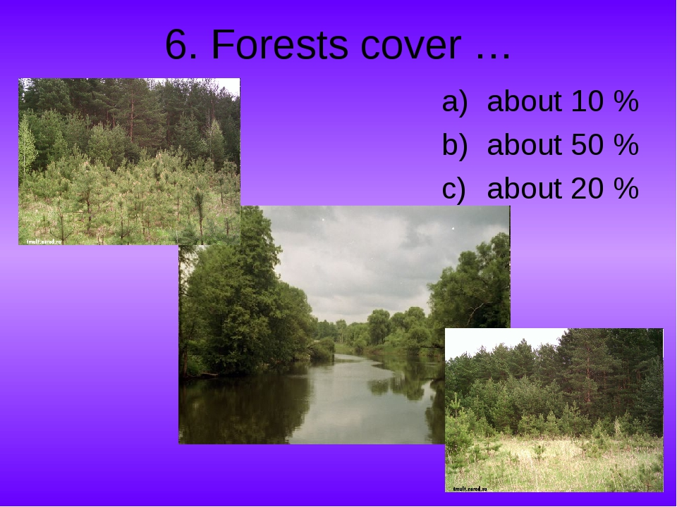 6. Forests cover … about 10 % about 50 % about 20 %