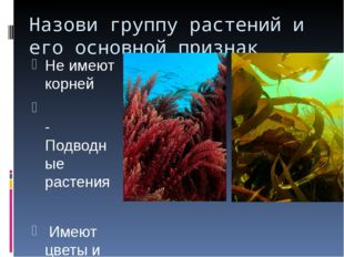 Назови группу растений и его основной признак Не имеют корней -Подводные раст