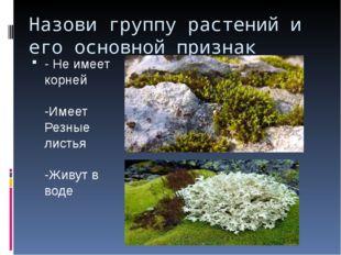 Назови группу растений и его основной признак - Не имеет корней -Имеет Резные