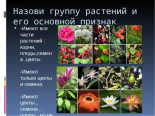 Назови группу растений и его основной признак -Имеют все части растений : кор