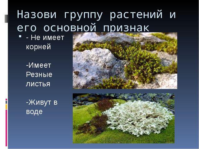 Назови группу растений и его основной признак - Не имеет корней -Имеет Резные...