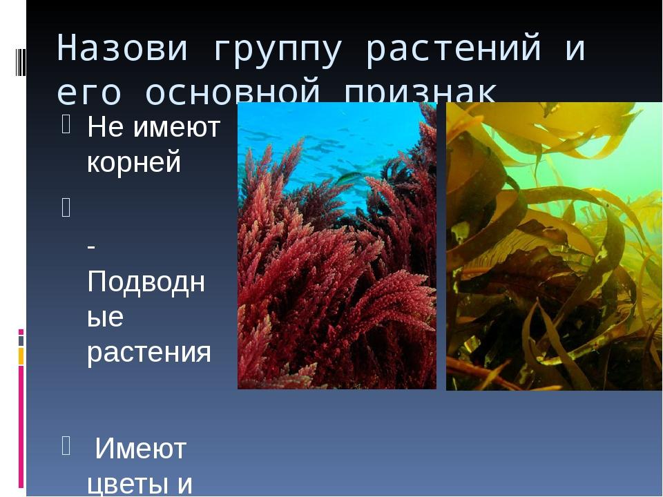 Назови группу растений и его основной признак Не имеют корней -Подводные раст...