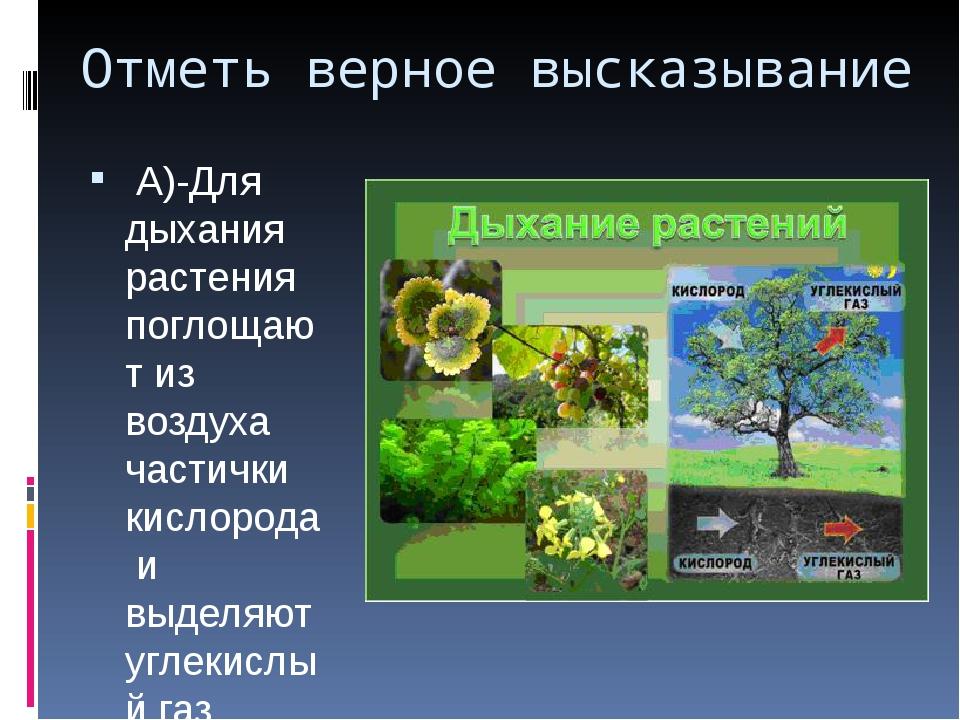 Отметь верное высказывание А)-Для дыхания растения поглощают из воздуха части...