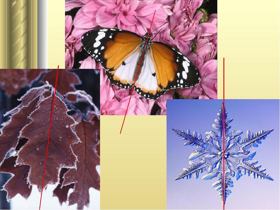 примеры симметрии в природе картинки для хочу поделиться