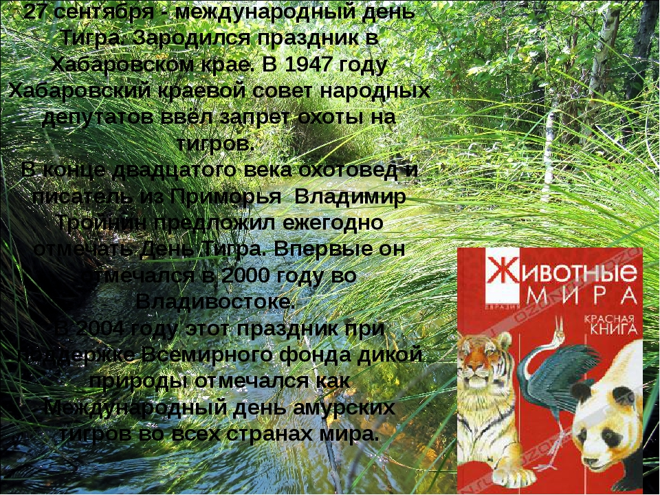 27 сентября - международный день Тигра. Зародился праздник в Хабаровском крае...