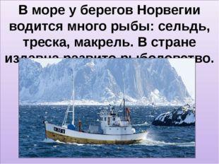 В море у берегов Норвегии водится много рыбы: сельдь, треска, макрель. В стр
