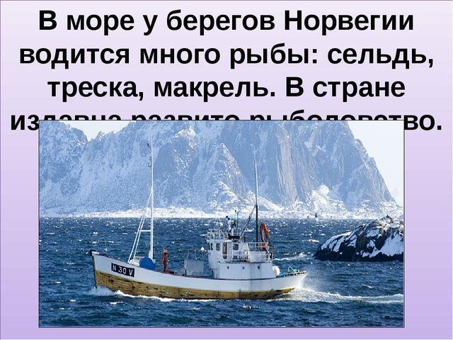 В море у берегов Норвегии водится много рыбы: сельдь, треска, макрель. В стр...
