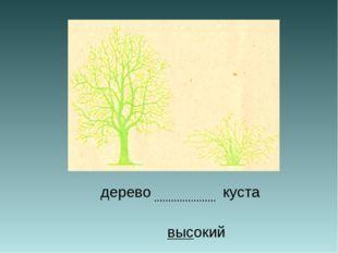 дерево куста высокий ………………….