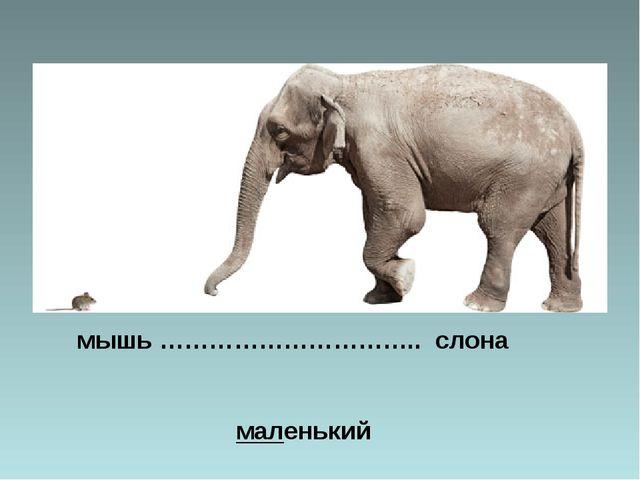 мышь ………………………….. слона маленький