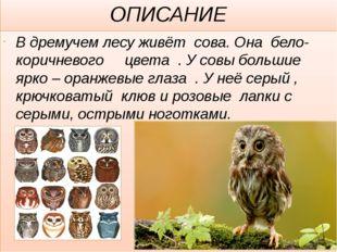 ОПИСАНИЕ В дремучем лесу живёт сова. Она бело- коричневого цвета . У совы бол