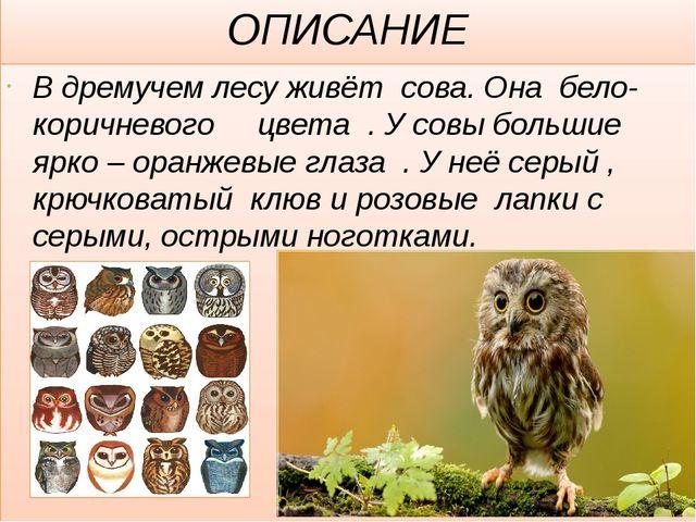 ОПИСАНИЕ В дремучем лесу живёт сова. Она бело- коричневого цвета . У совы бол...