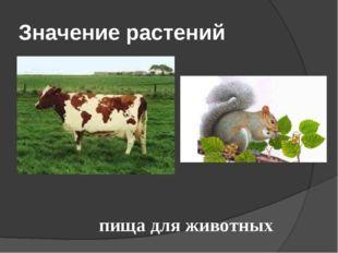 Значение растений пища для животных