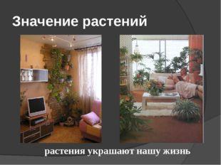 Значение растений растения украшают нашу жизнь