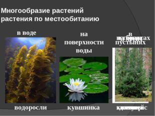 Многообразие растений растения по местообитанию в воде водоросли на поверхнос