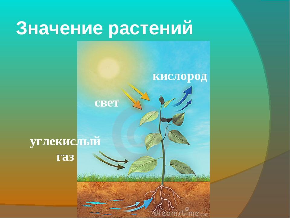 Значение растений свет углекислый газ кислород
